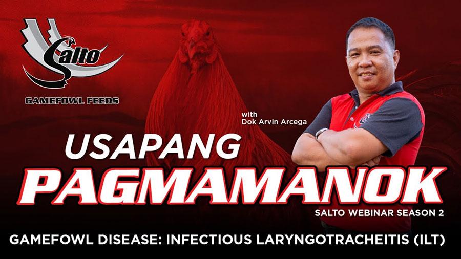 Gamefowl Disease: Infectious Laryngotracheitis (ILT)