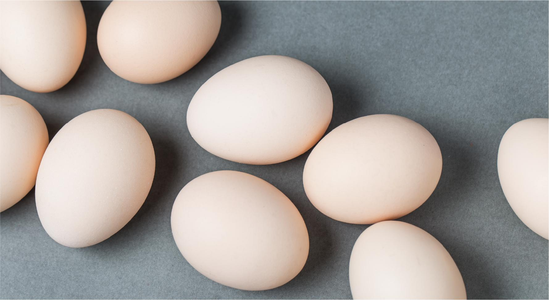 egg storage-01